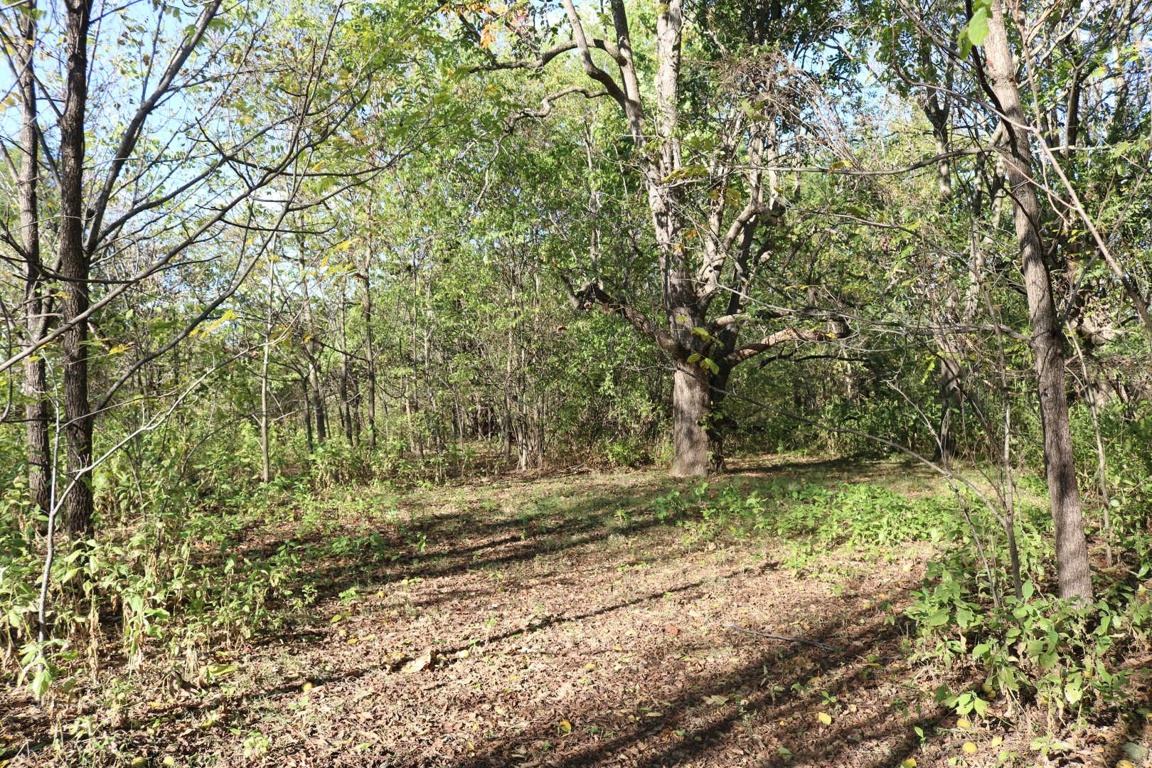 Over 27 acres of property in Midway!